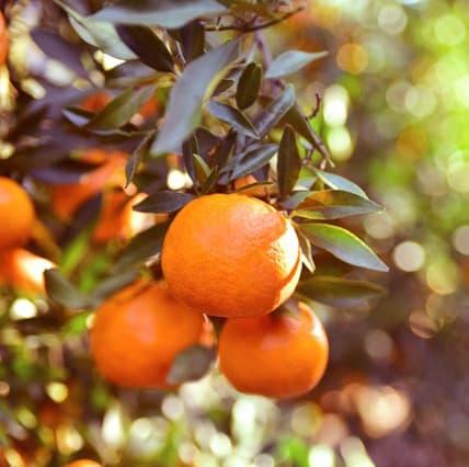 Scegliamo sempre frutta e materie prime di origine garantita